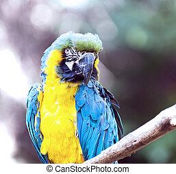 close-up on the head of Ara ararauna parrot