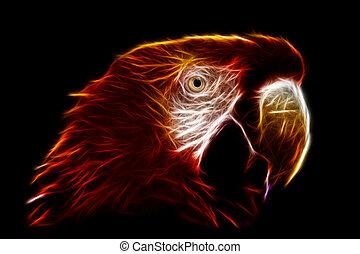 Ara Macaw Fractals