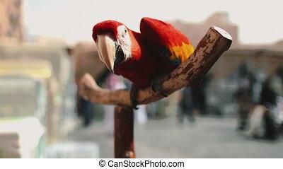 ara parrot close up in exotic bird animal market