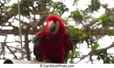Ara parrotclose up