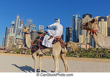 Arab man sitting on a camel on the beach in Dubai