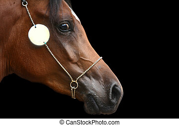 arabe, cheval, tête