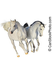 arabe, chevaux, deux