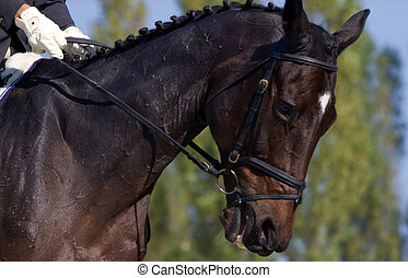 Animals - Arabian horse during the competition.