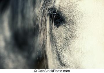 Arabian Horse Eye. shallow depth of field