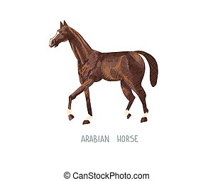 arabian horse hand drawing sketch vector illustration