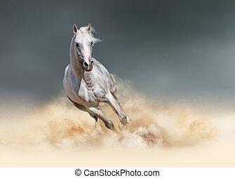 Arabian horse in the dust