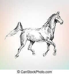 arabian horse riding, drawn