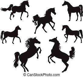 Arabian Horses - Silhouettes of Arabian Horse