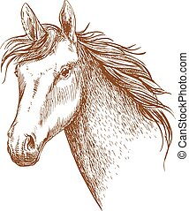 Arabian stallion horse head sketch
