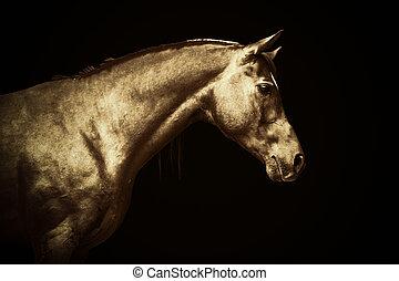 arabisch, gold, pferd, porträt, auf, schwarzer hintergrund, gefärbt, kunst
