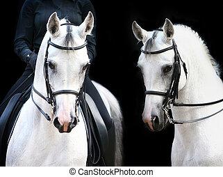 arabo, bianco, cavaliere