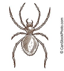 Arachnid or spider isolated sketch, tarantula or black widow...