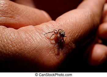 Arachnophobia? No thank you!