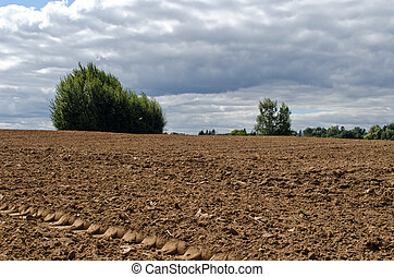 arado, campo agricultura, árvores, crescendo, solo