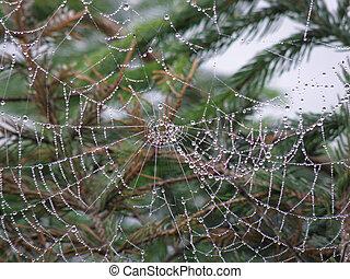 araignée, arbre, toile