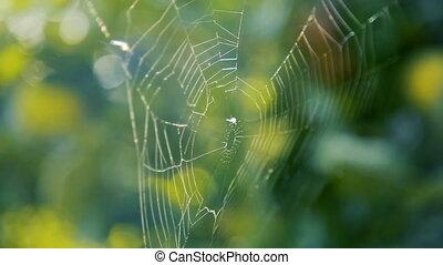 araignée, branches, jardin, toile