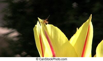 araignée fleur, explore
