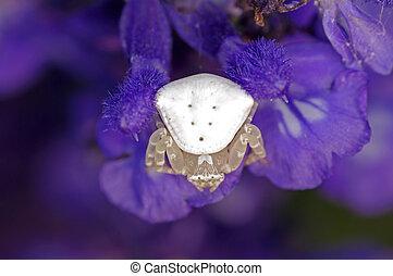 araignée fleur