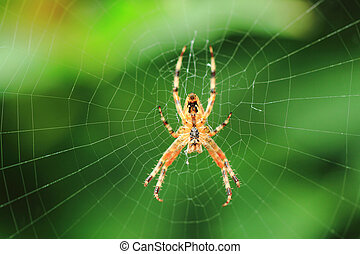 araignée verte, fond