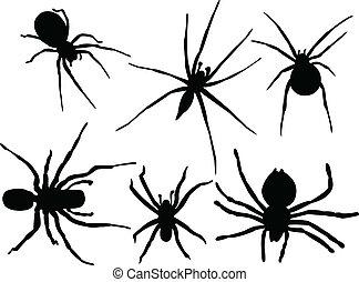 araignées, collection