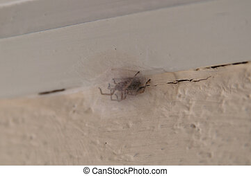 poche insecte oeuf bogue cafard oeuf isol cafard. Black Bedroom Furniture Sets. Home Design Ideas