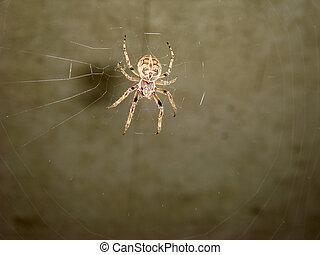araignés, 006