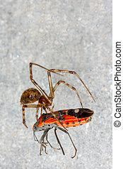 araignés, filet, sien, attrapé, coléoptère