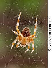 araignés, &, toile