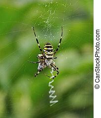 araignés, victime
