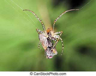 araignés, victime, &
