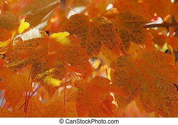 arancia, congedi verdi