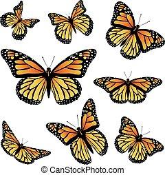arancia, farfalla monarca