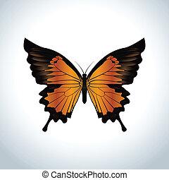 arancia, farfalla