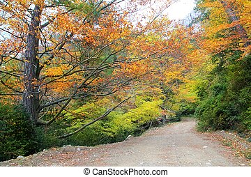 arany-, színes, zöld, sárga, ősz erdő, bukás, bükkfa