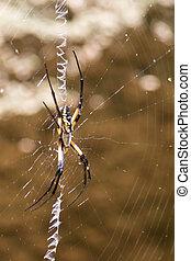 arany-, takács, gömb pók