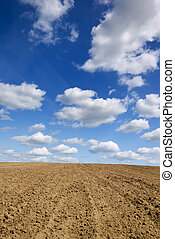 arar, field.