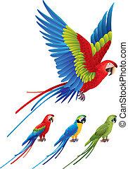 aras, macaw, papagaio, sentando, árvore, espalhar, asas