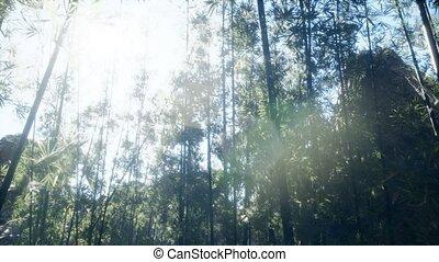 arashiyama, ветреный, спокойный, бамбук, лесок