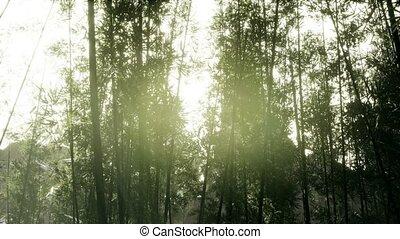 arashiyama, лесок, ветреный, бамбук, спокойный