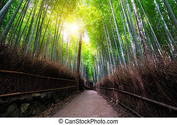arashiyama, 京都, 日本, 有名な場所, タケ森林