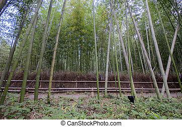 arashiyama, bambú, famoso, bosque, lugar, kyoto
