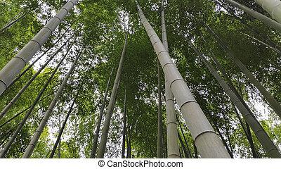 arashiyama, bosque, bambú, kyoto, lugar, famoso