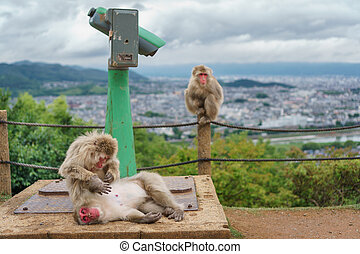 Arashiyama mountain with monkeys and binoculars