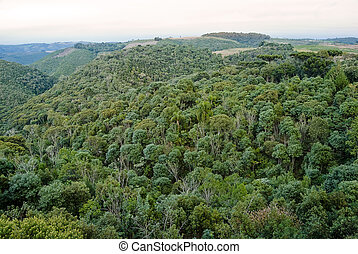 Araucaria forest is a associated ecosystem to brazilian atlantic rainforest, endangered of extinction. Today less than 1% of araucaria forest.