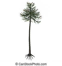Araucaria Tree - Araucariaceae is a very successful early...