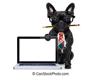 arbeider, dog, kantoor