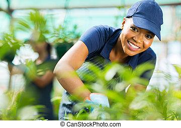 arbeitende , arbeiter, junger, baumschule, gewächshaus, weiblicher afrikaner