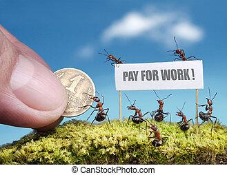 arbete, betalning, myror, begäran