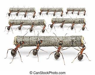 arbete, myror, teamwork, begrepp, loggar